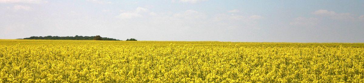 oilseed-rape-497258_1920
